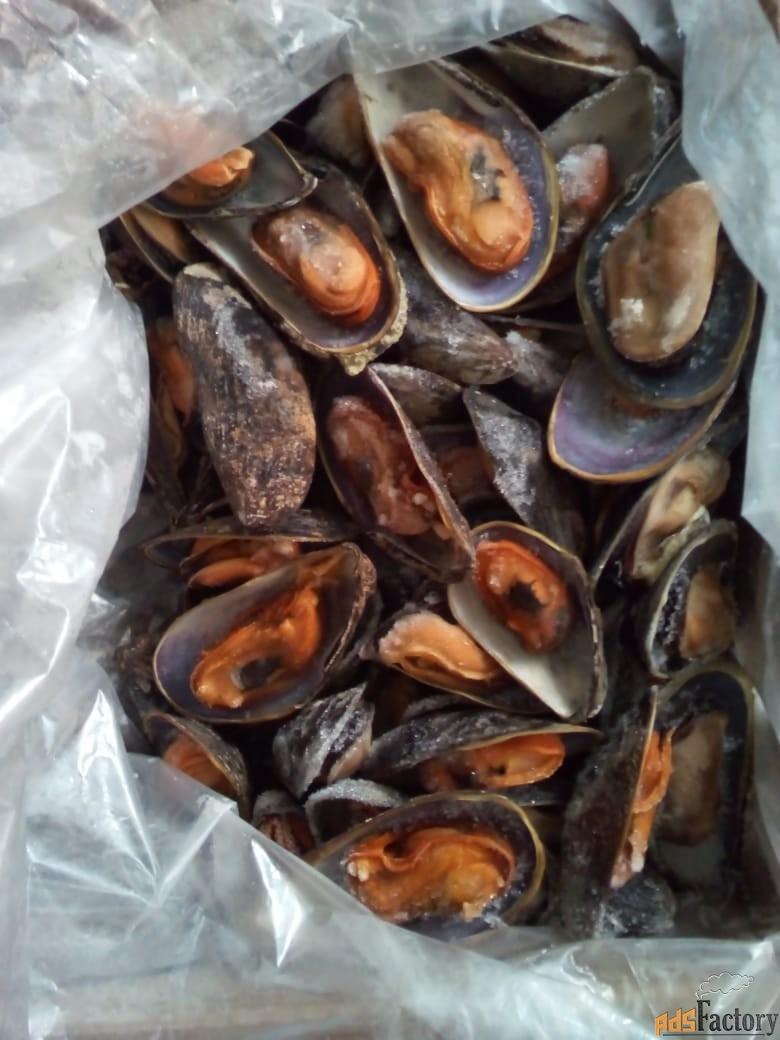 морепродукт. мидия.
